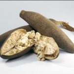 Il Baobab, miracolosa panacea